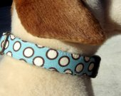 BROOKLYN EGG CREAM Blue Brown White Dots Organic Cotton Dog Collar SIZE MEDIUM - - All Antique Brass Hardware