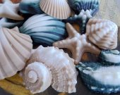 His And Hers Seashell Gift Set - gift boxed